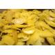 Decotto Cattiva Digestione - Cod.6/B